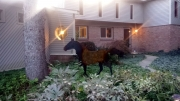 Sylvia-Anthony---6ft-Horse-