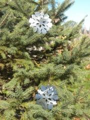 Xmas-Ornament---Snowflakes-in-tree