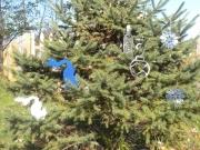 Xmas-Ornament---lots-of-ornaments-in-tree